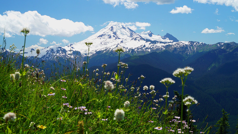 Alpine view and flowers